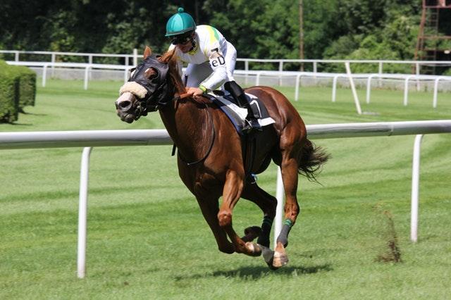 Hästsporter